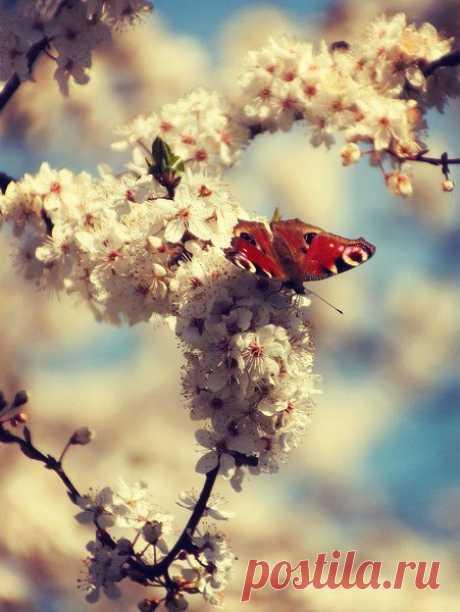 Я чувствую дыхание весны В холодном ветре с северным акцентом, Который обжигающим абсентом Врывается в мои цветные сны.  Ещё недавно белая метель В них пела свои стылые напевы. И вот уже походкой королевы В них входит светлоокая капель.