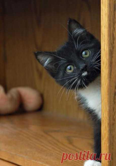Я тебя вижу! Ку-ку