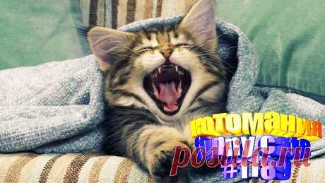 Вам нравится смотреть приколы с котами? Тогда мы уверены, Вам понравится наше видео 😍. Также на котомании Вас ждут: видео кот,видео кота,видео коте,видео котов,видео кошек,видео кошка,видео кошки,видео о котах, видео прикол, видео с кошками, котик, котики смешное, кошка видео, прикол видео кошек, приколы о кошках видео, про котов, ролики про котов, смешное о кошках, смешные видео с кошками, смешные кошки видео