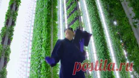 Как сократить площадь теплицы на 99% и полив на 95%?  По словам Нейта Стори, будущее ферм - вертикальное. Оно находится в помещении, может быть размещено в любой точке планеты, в значительной степени интегрировано с роботами и искусственным интеллектом, а также дает лучшие фрукты и овощи, используя на 95% меньше воды и на 99% меньше...