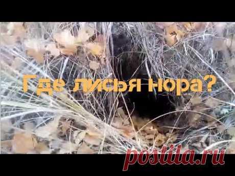 Где лисья нора, ямы в рост человека, молодой лес част 1 - YouTube