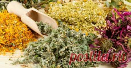 Лучшие антипаразитные травы! Питание играет главную роль в здоровьечеловека. Не правильное, беспорядочное, жирноеи сладкое питание — всё это создаёт идеальную среду для размножения паразитов — от вирусов до глистов. Необходимо […]
