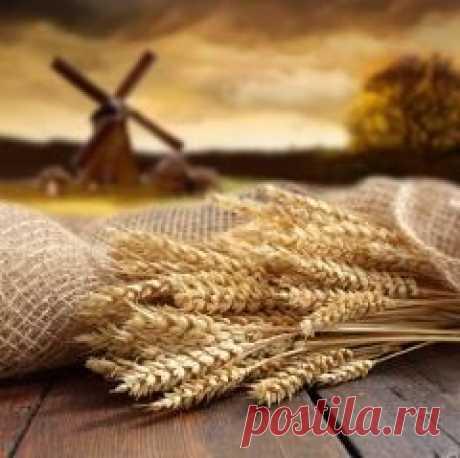 Сегодня 03 октября в народном календаре Астафий Ветряк