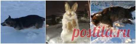 Видео замерзших насмерть животных появились в Казнете - Новости   Караван