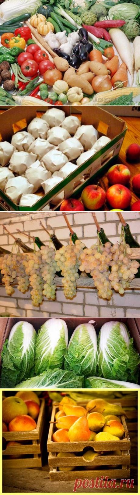Como guardar correctamente hortalizas y las frutas en el sótano