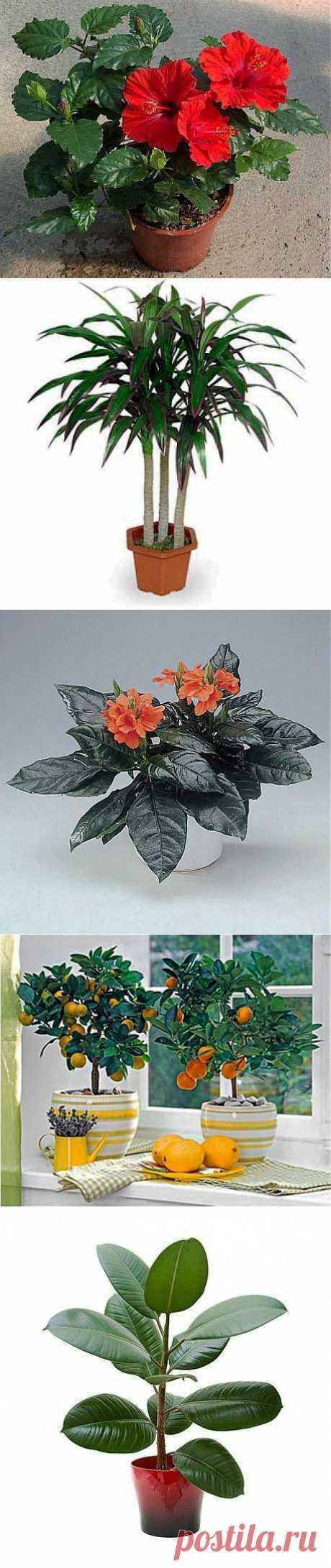 Цветы-талисманы / Домоседы