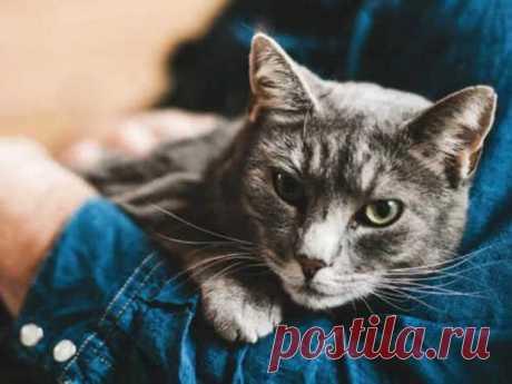6 причин, почему кошки спят на человеке - Сонники, гороскопы, гадания - медиаплатформа МирТесен Кошка хранит много магических тайн. Аура ее очень велика: она охватывает не только одного хозяина, но и всю семью, квартиру и территорию, которая кошка считает своей. Поэтому важно понимать, что, когда домашний любимец ложится спать рядом с вами, он не только требует внимания и ласки. Его