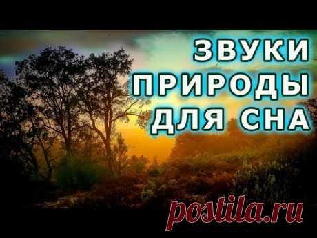 ЗВУКИ ПРИРОДЫ для Сна и Медитации - Relax 10 часов. Звуки леса пение птиц приятная мелодия - YouTube