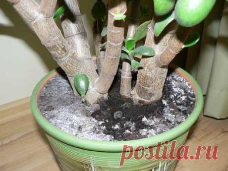 Комнатные растения | Записи в рубрике Комнатные растения | MALEFISENTA