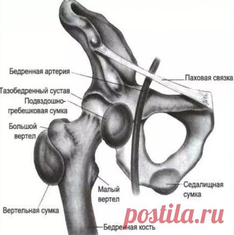 Развиваем подвижность тазобедренного сустава. Упражнения в положении лежа. | health and beauty | Яндекс Дзен
