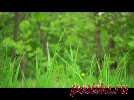 Пение птиц на лугу в теплый летний день 4K