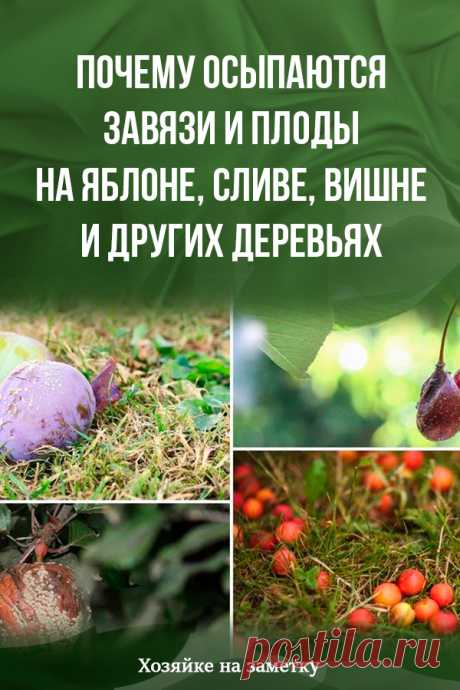 Why ovaries and fruits on an apple-tree, plum, cherry and other trees are showered