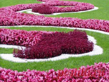 Низкорослые цветы для клумб - фото примеров
