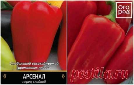 Лучшие сорта сладкого перца для средней полосы России | Перец, баклажаны (Огород.ru)