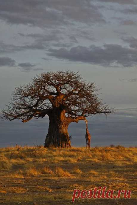 Africa | Wonderful Tree-Forestscape
