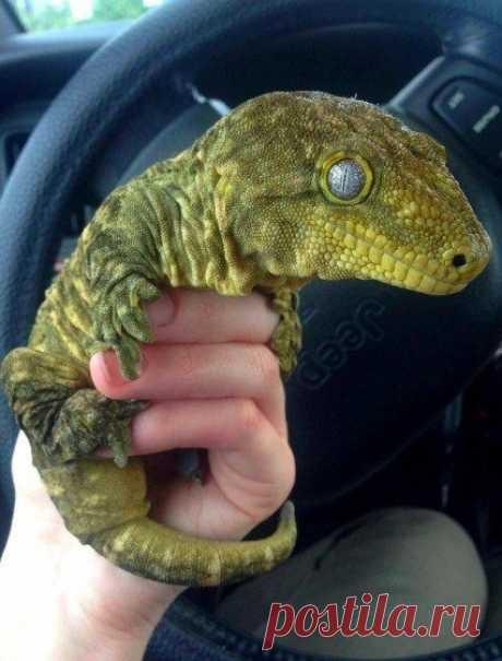 Современные динозавры