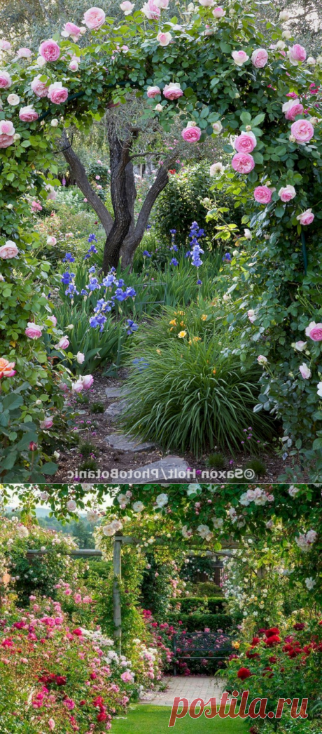 40+ Admirable Eden Rose Garden To Enhance Your Beautiful Garden - Page 5 of 41