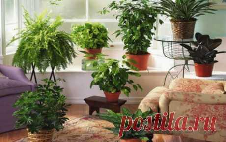 Хотите роскошный цветник в квартире? Тогда запоминайте секретики — Бабушкины секреты