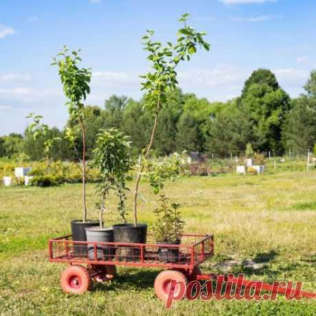 Приживаемость саженцев – маленькие хитрости от специалиста-садовода