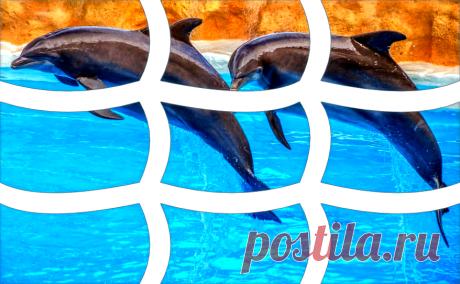 Дельфины. Шаблон пазла для нарезки своими руками