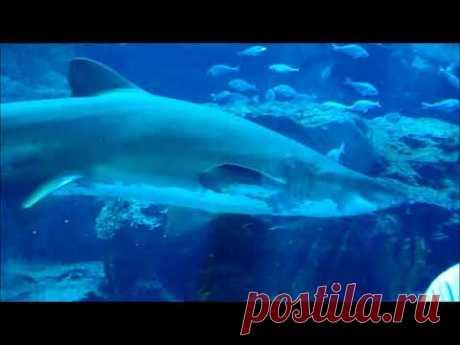 Как поживают акулы аквариуме (ОАЭ)