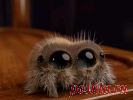 Почему нельзя убивать пауков вдоме: приметы Народные приметы касаются многого, втом числе мира насекомых. Наши предки верили, что ихокружают знаки, которые помогают избавляться отнеприятностей ипривлекать вжизнь удачу. Узнайте отом, что может произойти, если нечаянно или нарочно убить паука.