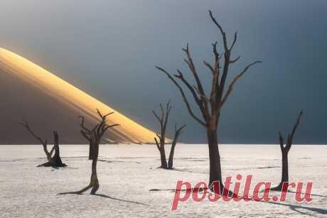 «Руки пустыни» «Дэдвлей – мертвая долина, которая находится на дне высушенного озера в центральной части пустыни Намиб. Дэдвлей окружена высокими песчаными дюнами, достигающими 300 метров!» – рассказывает автор фото Максим Сластников: nat-geo.ru/community/user/26302/.
