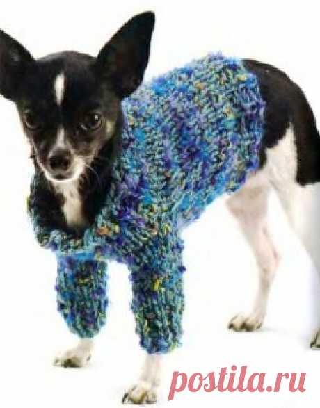 Вязанная одежда для собак. - Страница 2 - Вязаные вещи собаке и кошке – они хотят тоже пофорсить немножко - Форум-Град