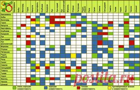 Совместимость овощных культур при посадке в теплице: поликарбонат совмещенный, таблица выращивания, урожайность