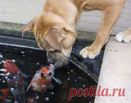 рыбка золотая)