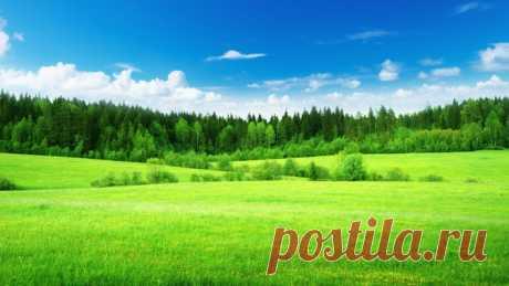 зелень лето поле лес greens summer field forest Скачать картинку 4200x2363 зелень лето поле лес greens summer field forest