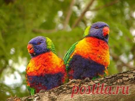 Буйство красок в мире птиц - Путешествуем вместе