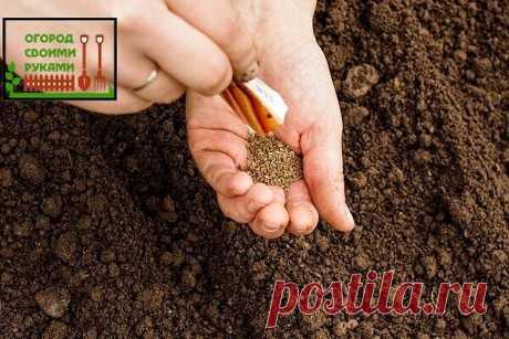 #советы  Простой способ посева моркови без прореживания.  Первые всходы через 3 дня! Как вы уже поняли, этот метод имеет три положительные стороны: Вы получаете урожай на 2-3 недели быстрее и сможете использовать морковку в пищу ранним летом. Вы избавляетесь от трудоемкой работы прореживания моркови. Культура растет быстрее сорняков, что облегчает процесс прополки. Что нужно для того, чтобы морковь взошла через 3 дня? Возьмите семена моркови, уложите их в тканевый мешочек,...