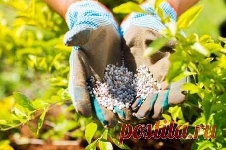 Фосфорные удобрения для томатов, виды и названия, как приготовить и применять
