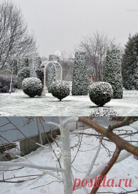 Как спасти сад от зимней оттепели: советы и рекомендации по уходу