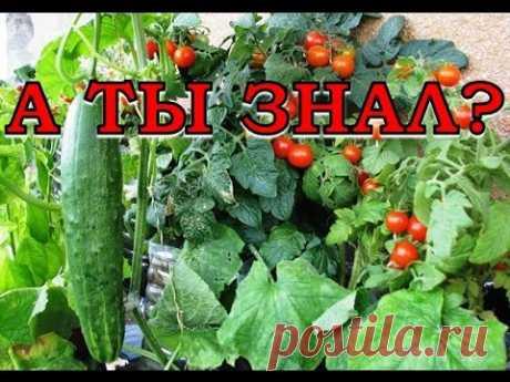 Соседство овощей в теплице - YouTube