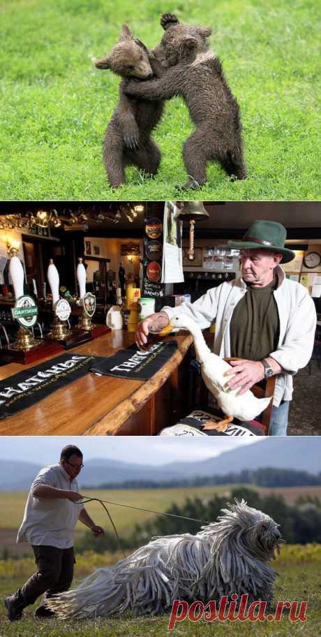 (+1) тема - Самые забавные, необычные и интересные фотографии животных за прошлую неделю | САМЫЙ СОК!