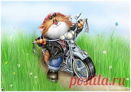 Замечательные котики Алексея Долотова | Полезный сайт добрых советов