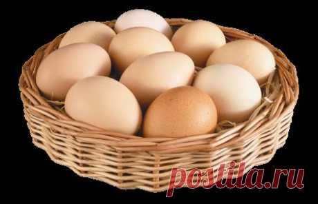 Вредны ли яйца? - Блог Марина на 24open.ru