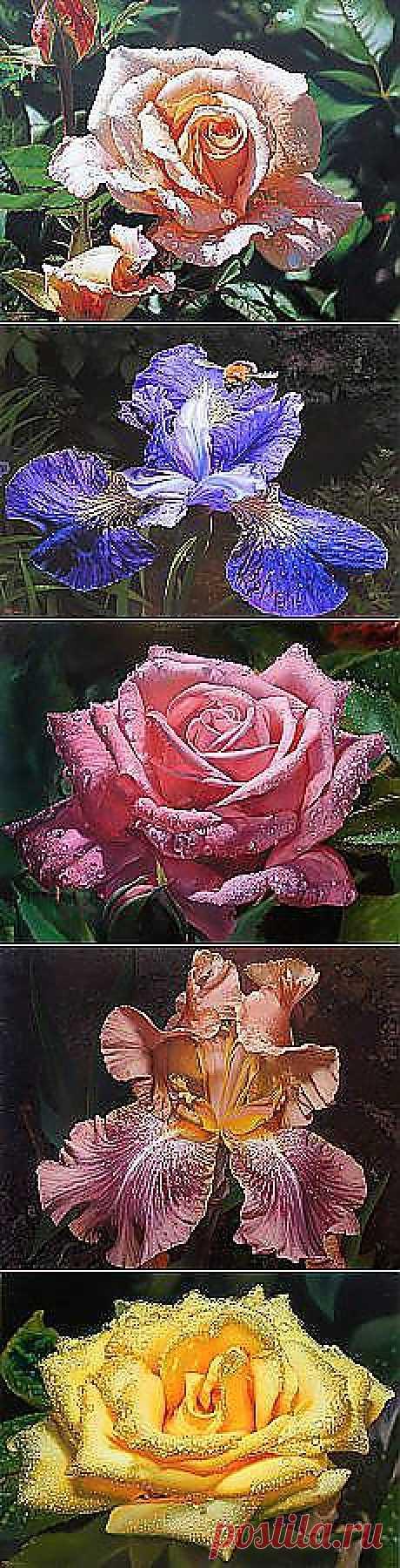 ANASTASIA KASIMOVA: my favourite flowers........ | Postila.ru