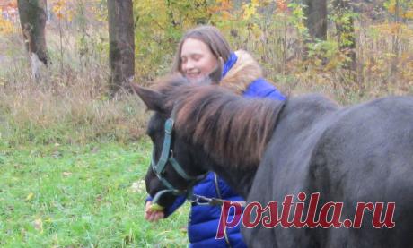 Почему лошадям нельзя сахар | Интересно о лошадях | Яндекс Дзен