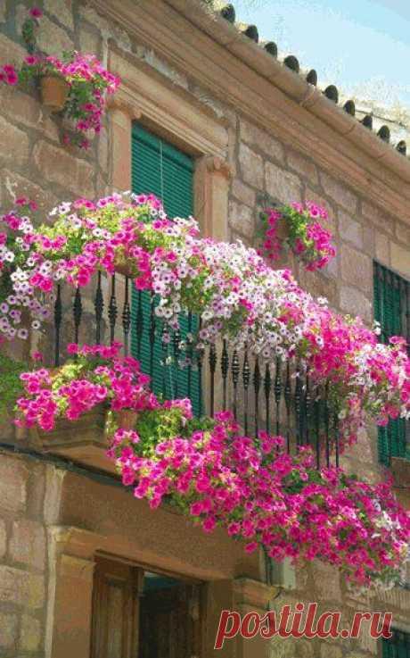 Композиции цветов для балконных ящиков   Самоделкино
