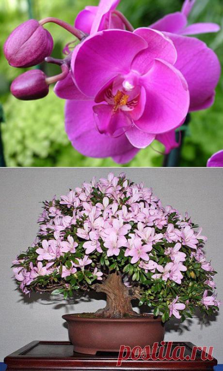 Домашние цветы в горшках, фото и название