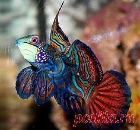 Saltwater Regal angel fish   Under The Sea