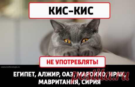 10 безобидных слов из русского языка, которые в других странах могут принять за ругательство — Infodays