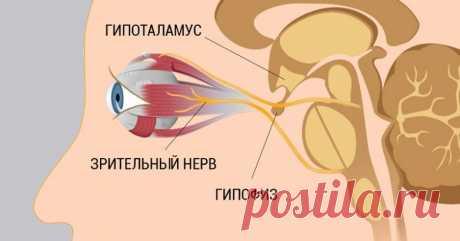 8 шагов к улучшению и восстановлению зрения / Будьте здоровы