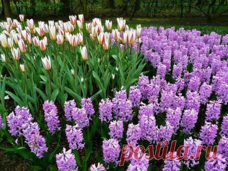 Осень — время сажать луковичные цветы для роскошного сада | Секреты садоводства | Яндекс Дзен