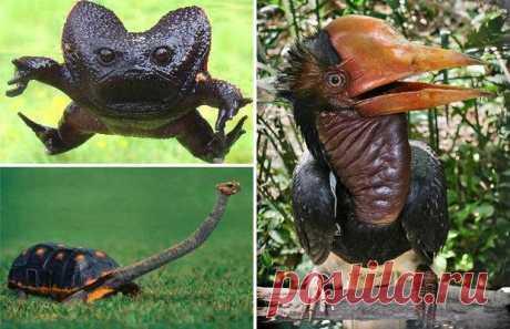 Удивительные и необычные животные нашей планеты - Природа нашей планеты невероятна, разнообразна и удивительна. В подборке из разных, но очень странных животных может что-то станет для вас настоящим открытием.
