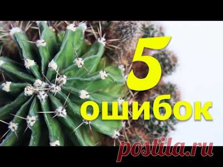 5 РАСПРОСТРАНЕННЫХ ОШИБОК В УХОДЕ ЗА КАКТУСАМИ - YouTube