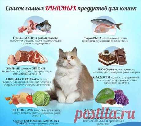 Почему котам нельзя есть рыбу и рыбные продукты?